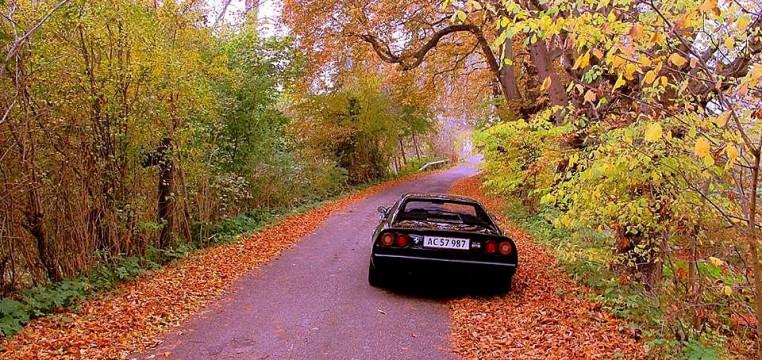 autumn_8